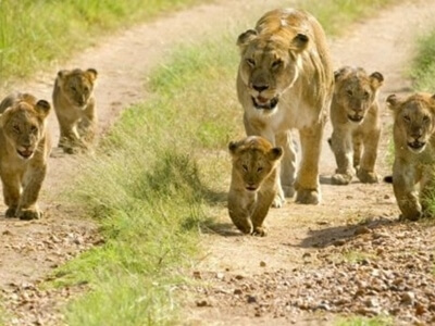 Sasan-Gir-National-Park