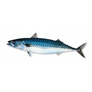 mackerel-fillets