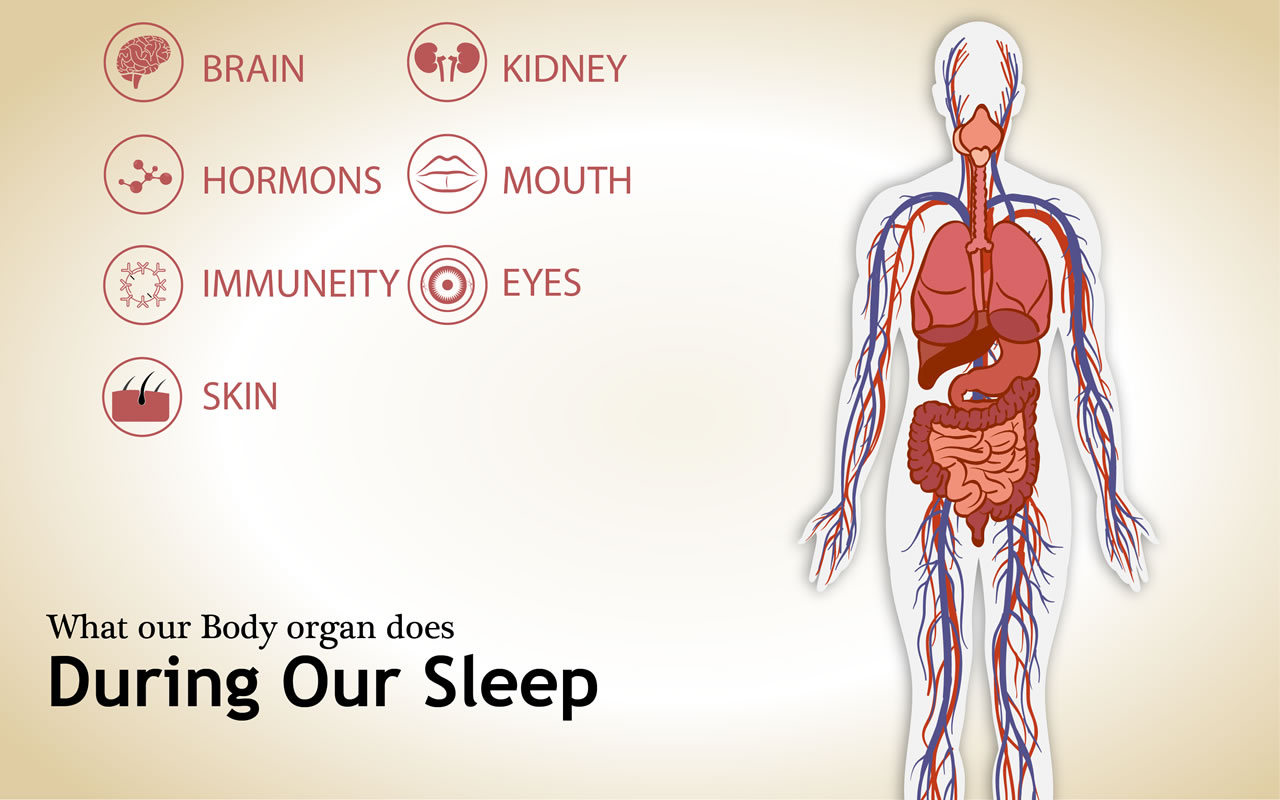 What our body does when we sleep